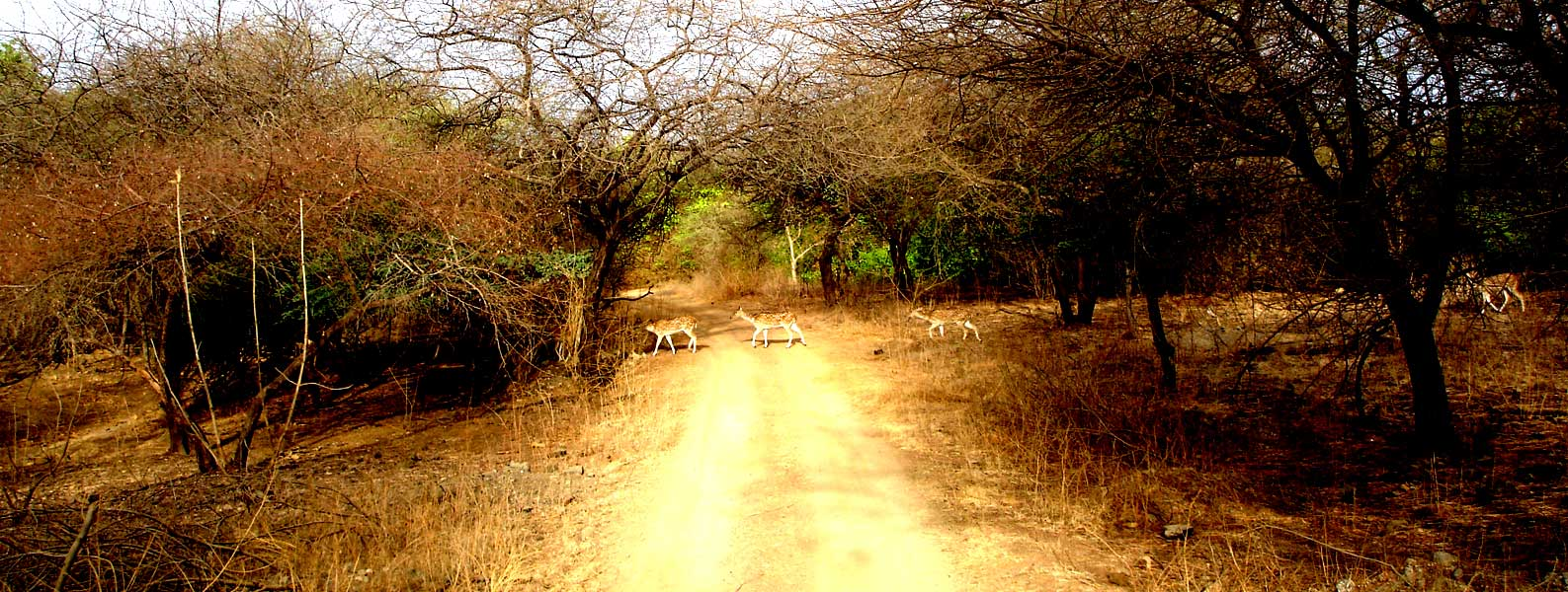 Gir Forest Circuit – A Motorcycle Trip