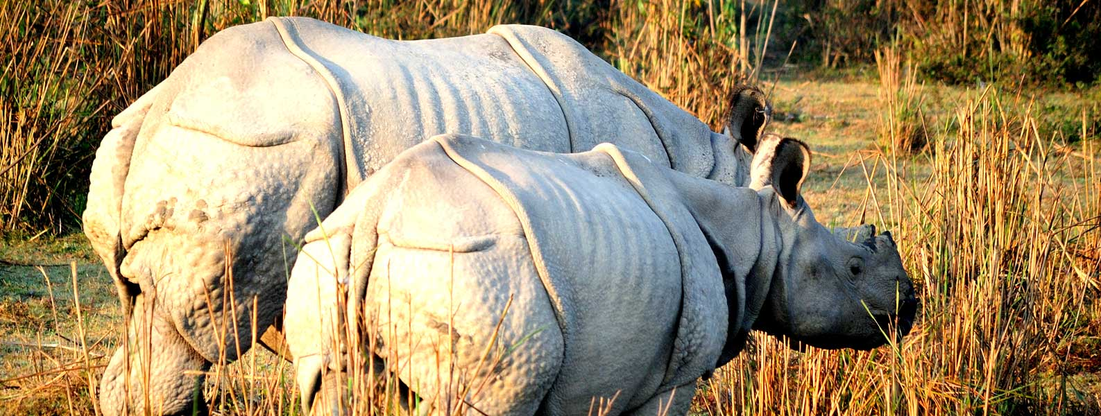 Kaziranga NP Wildlife Safari