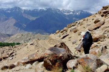 Ladakh Backpacking trek