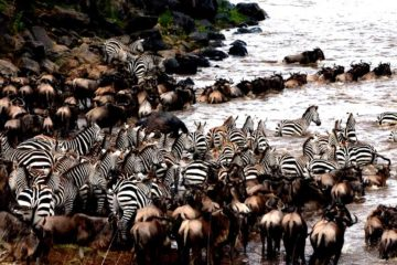 The Great Migration safaris